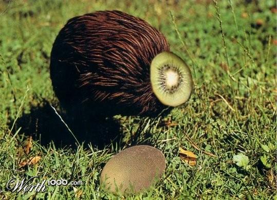 Kiwi Fruit-Bird - Worth1000 Contests